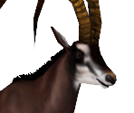 Giant Sable Antelope Male