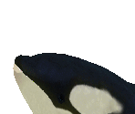 Orca Baby