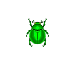 Fruit Beetle